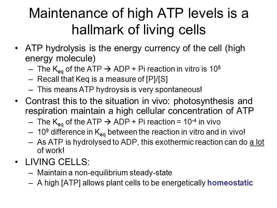 ATP hydrolysis is the energy currency of the cell (high energy molecule) –The K eq of the ATP  ADP + Pi reaction in vitro is 10 5 –Recall that Keq is a measure of [P]/[S] –This means ATP hydroysis is very spontaneous.