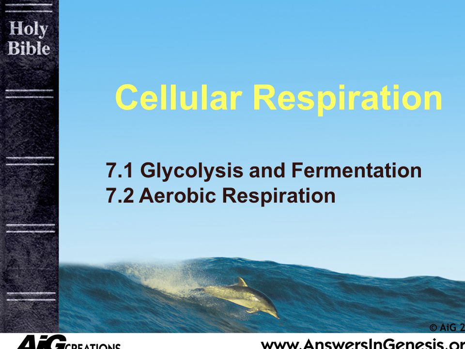 Glycolysis Occurs in cytosol outside mitochondria Converts the 6-carbon glucose into 2 3-carbon pyruvic acid molecules 4 ATP are make, but due to a deficiency of 2 ATP, the step generates a positive 2 ATP If oxygen is present then the reaction proceeds to kreb cycle