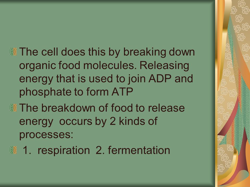 Cell Respiration A fuel molecule such as glucose is oxidized to form carbon dioxide and water.
