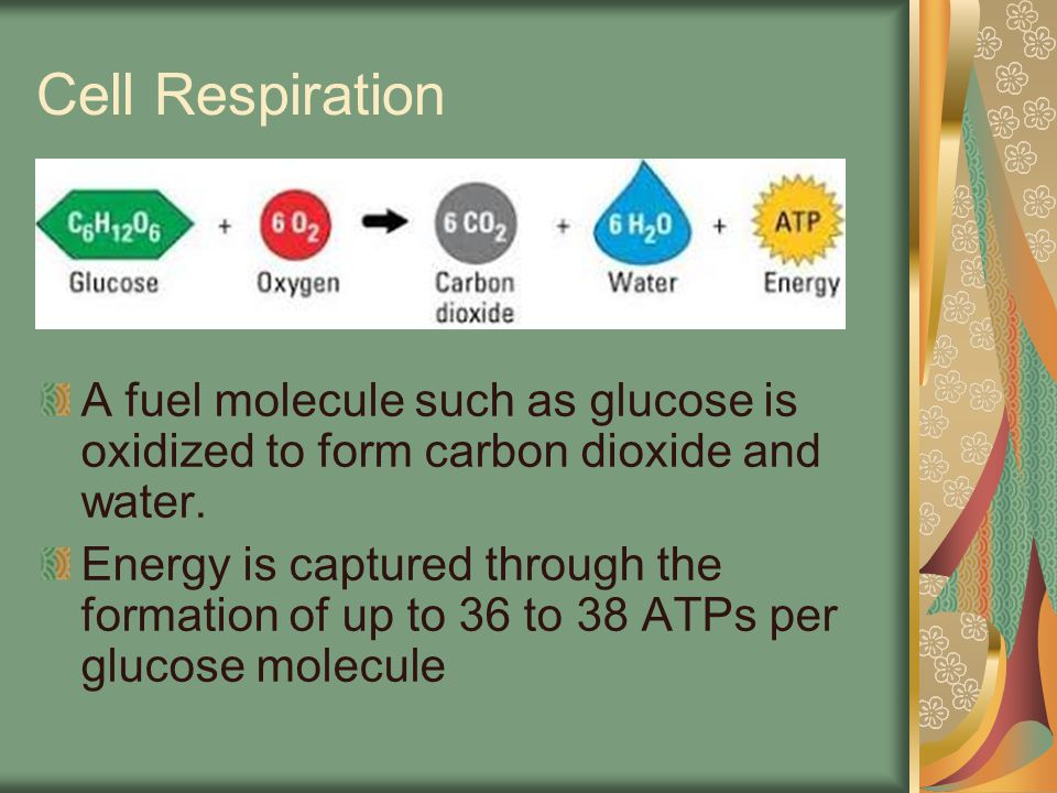 It is the process by which cells extract fee energy from the energy stored in chemical bonds of food molecules (glucose) This is done in a series of catabolic pathways featuring redox reactions and using oxygen as the final electron acceptor