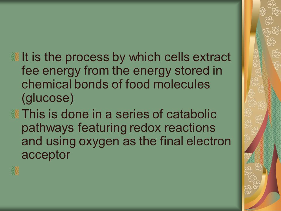 Kreb Cycle Is located within the mitochondria matrix Also called Citric acid cycle, or TCA Completes glucose oxidation by breaking down a pyruvic acid derivative (acetyl CoA) into carbon dioxide Is a circular sect of reactions because the reaction is ongoing, never reaching an endpoint.