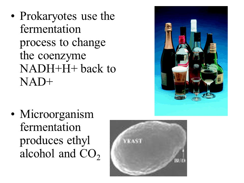 Prokaryotes use the fermentation process to change the coenzyme NADH+H+ back to NAD+ Microorganism fermentation produces ethyl alcohol and CO 2