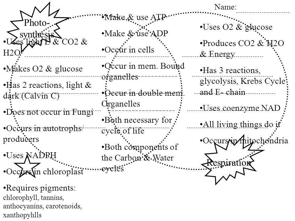Respiration Photo- synthesis Name: Uses light E & CO2 & H2O Makes O2 & glucose Has 2 reactions, light & dark (Calvin C) Does not occur in Fungi Occurs in autotrophs/ producers Uses NADPH Occurs in chloroplast Requires pigments: chlorophyll, tannins, anthocyanins, carotenoids, xanthopyhlls Make & use ATP Make & use ADP Occur in cells Occur in mem.