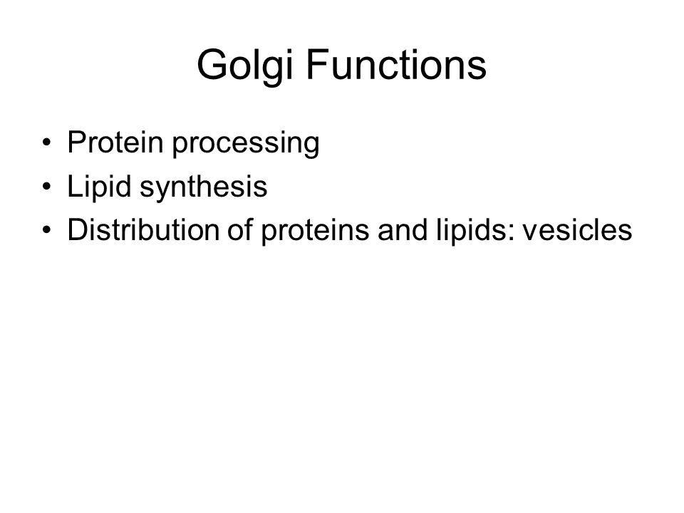 Golgi Functions Protein processing Lipid synthesis Distribution of proteins and lipids: vesicles