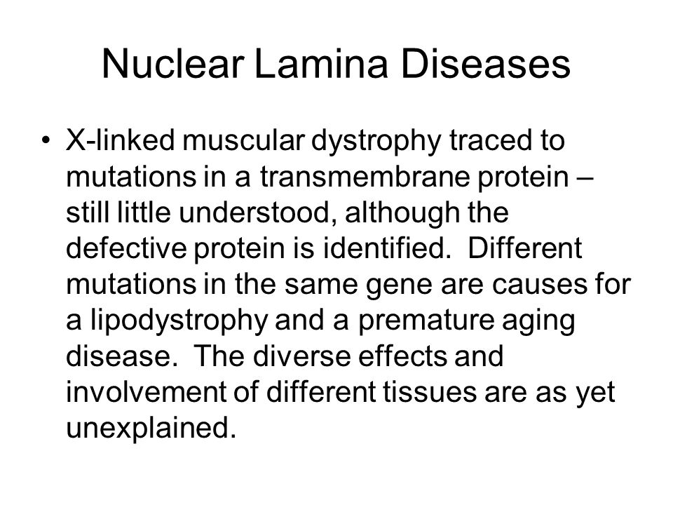 Nuclear Lamina Diseases X-linked muscular dystrophy traced to mutations in a transmembrane protein – still little understood, although the defective protein is identified.