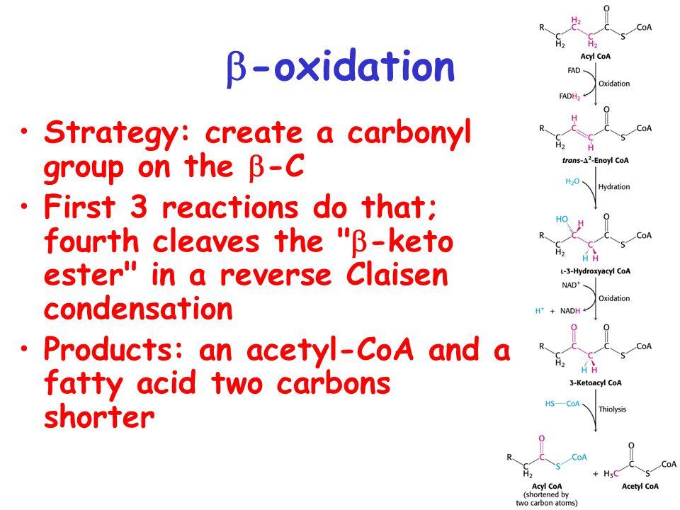  -oxidation B-oxidation of palmitate (C16:0) yields 106 molecules of ATP C 16:0-CoA + 7 FAD + 7 NAD + + 7 H 2 0 + 7 CoA  8 acetyl-CoA + 7 FADH 2 + 7 NADH + 7 H + 2.5 ATPs per NADH = 17.5 1.5 ATPs per FADH2 = 10.5 10 ATPs per acetyl-CoA = 80 Total = 108 ATPs 2 ATP equivalents (ATP  AMP + PPi, PPi  2 Pi) consumed during activation of palmitate to acyl-CoA Net yield = 106 ATPs