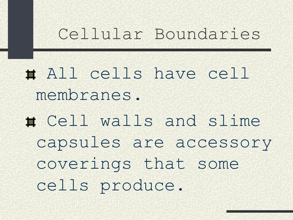 cytoplasm All the material, except the nucleus, inside a cell.