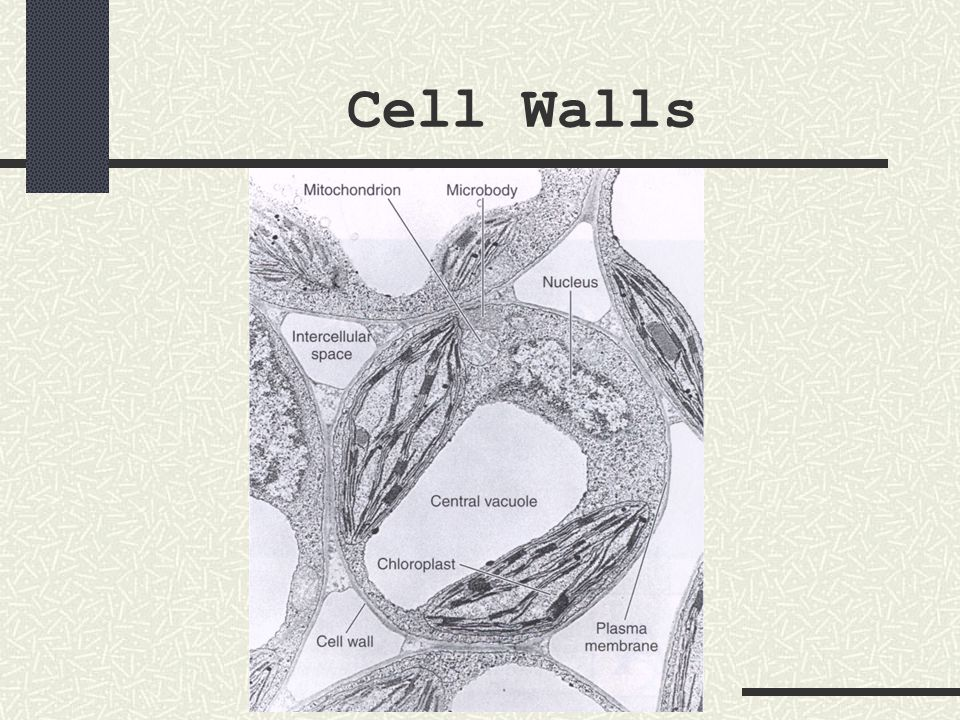 Vacuoles a membrane-bound sac that contains food, water, wastes, or other materials within a cell nickname containers of the cell small vacuoles are sometimes called vesicles