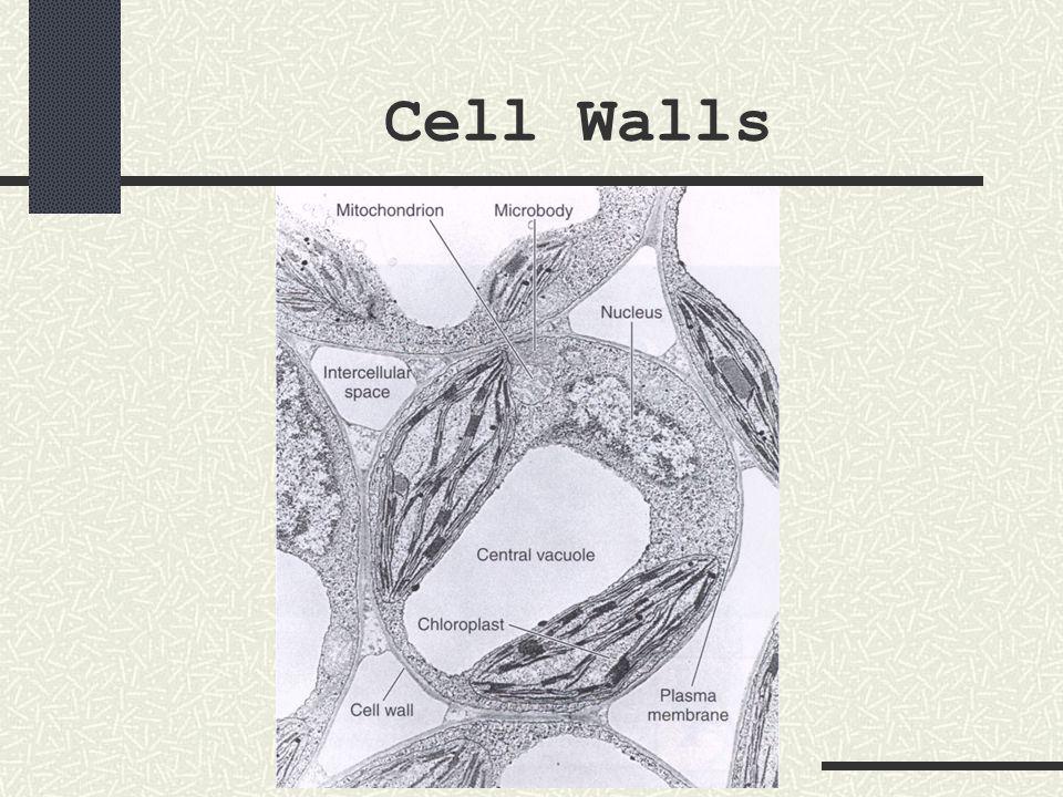 nucleus The nucleus has a double unit membrane around it called the nuclear membrane or nuclear envelope.
