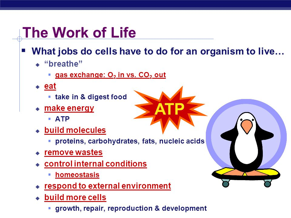  What jobs do cells have to do for an organism to live…  breathe  gas exchange: O 2 in vs.