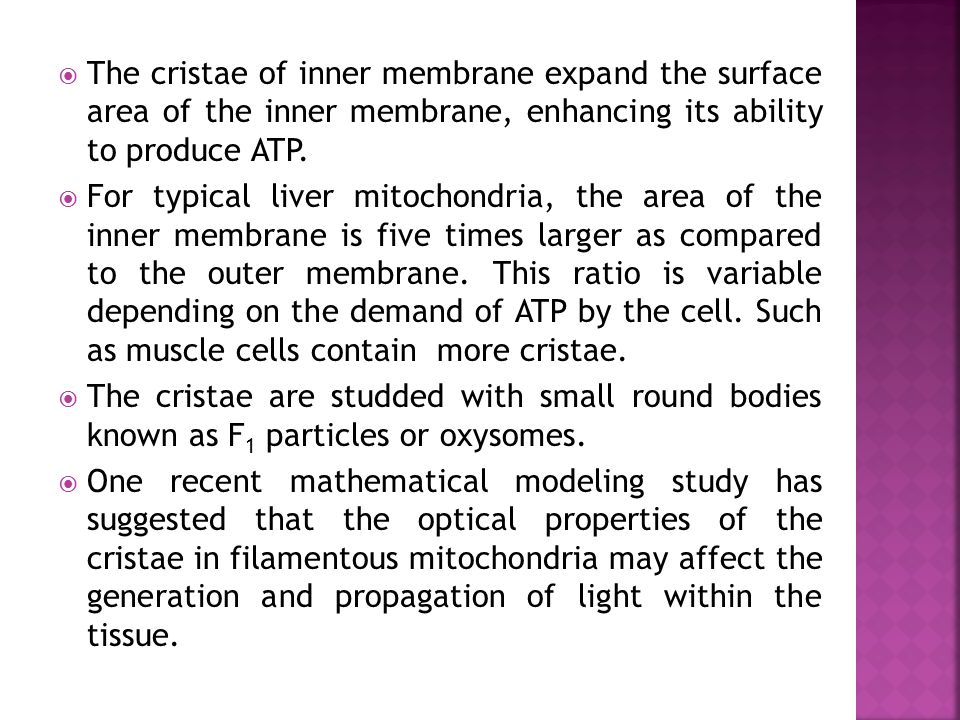  The cristae of inner membrane expand the surface area of the inner membrane, enhancing its ability to produce ATP.  For typical liver mitochondria,