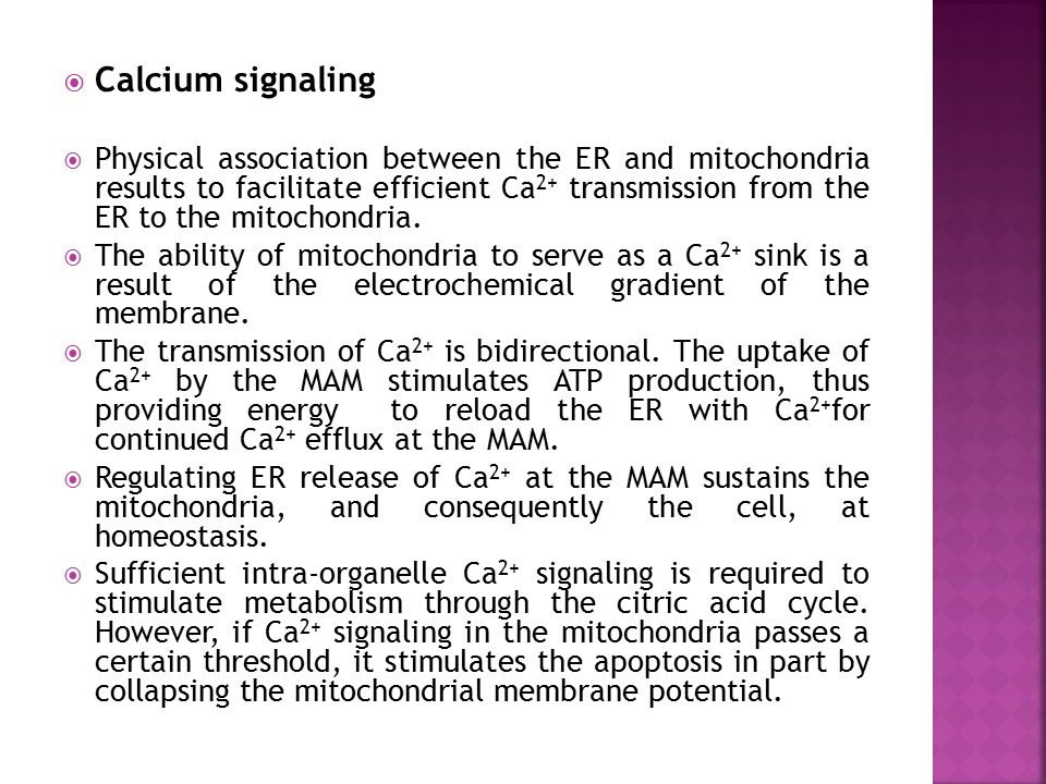  Calcium signaling  Physical association between the ER and mitochondria results to facilitate efficient Ca 2+ transmission from the ER to the mitoc