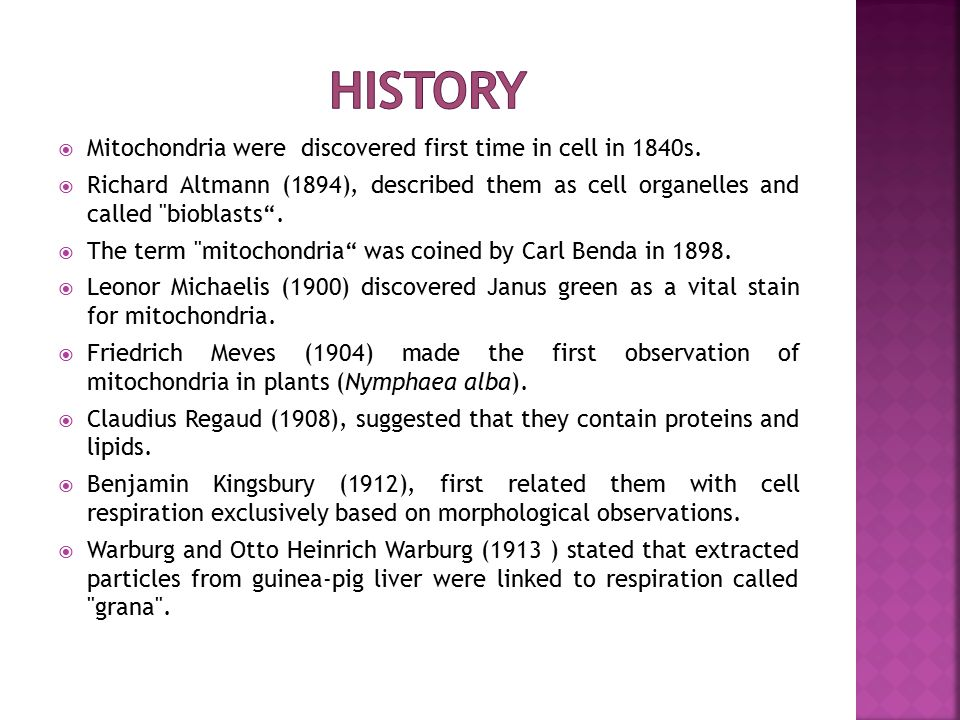 Mitochondrial DNA  A mitochondrion contains DNA, as circular chromosome.