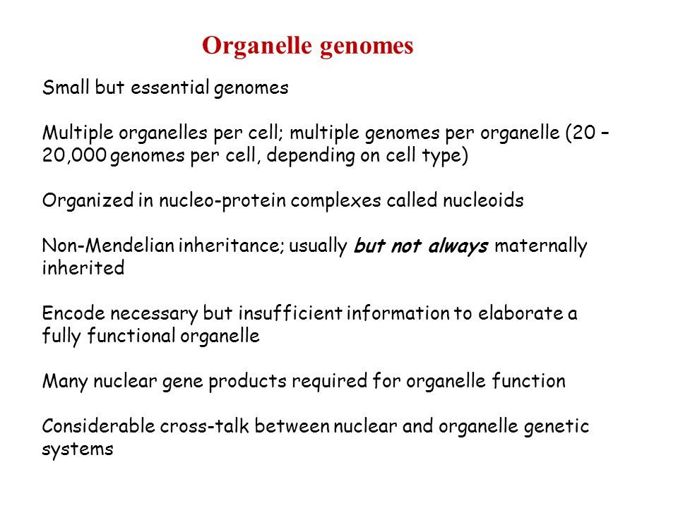 Organelle genomes Small but essential genomes Multiple organelles per cell; multiple genomes per organelle (20 – 20,000 genomes per cell, depending on cell type) Organized in nucleo-protein complexes called nucleoids Non-Mendelian inheritance; usually but not always maternally inherited Encode necessary but insufficient information to elaborate a fully functional organelle Many nuclear gene products required for organelle function Considerable cross-talk between nuclear and organelle genetic systems