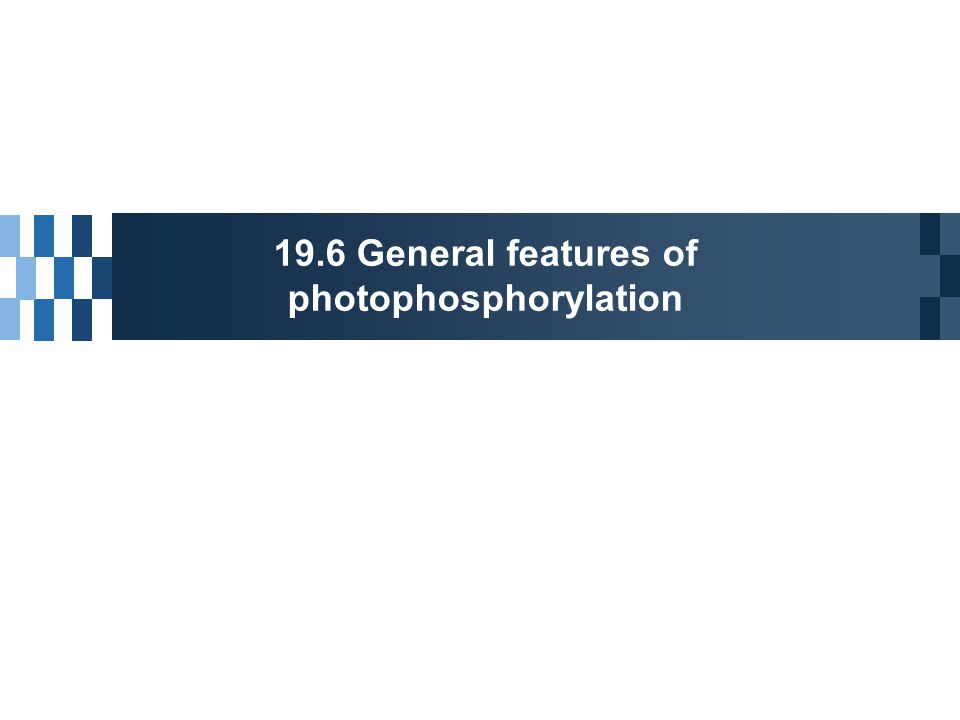 19.6 General features of photophosphorylation