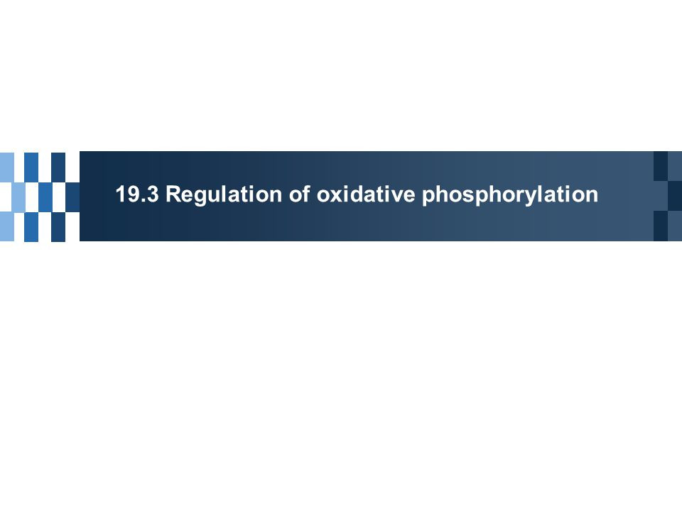 Regulation of Oxidative Phosphorylation Acceptor control of respiration  ADP (as a P i acceptor) Mass-action ratio  [ATP]/ ([ADP][P i ]); Normally high Inhibitory protein  IF 1 : bind to two ATPases as a dimer  Inhibition of ATP hydrolysis during hypoxic conditions (heart attack or stroke)  Dimerization is favored at low pH  Oxygen limitation  fermentation  lowering pH