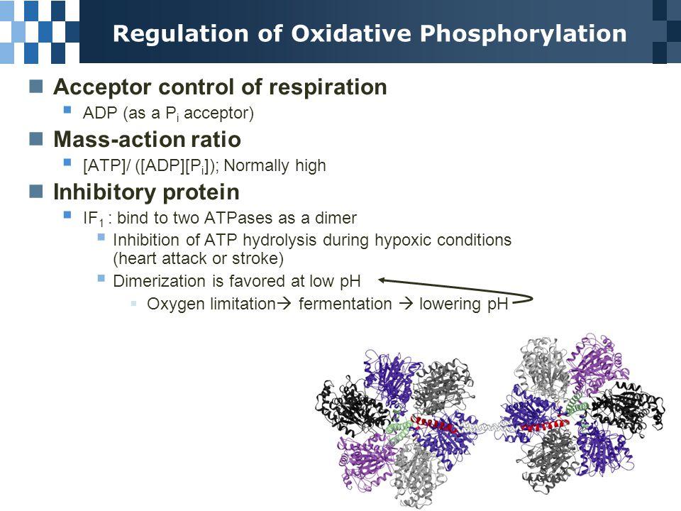 Photosynthesis: Harvesting light energy CO 2 + H 2 O light O 2 + (CH 2 O)