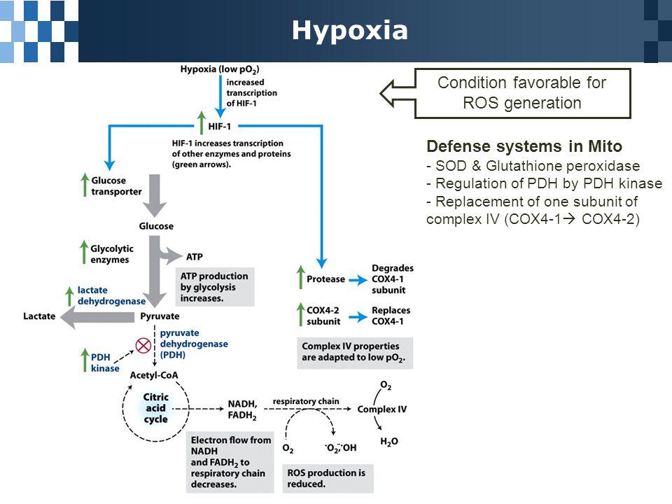 ATP-Producing Pathways are Coordinately Regulated Ratio of [ATP]/[ADP]  Coordinated regulation of major catabolic pathways