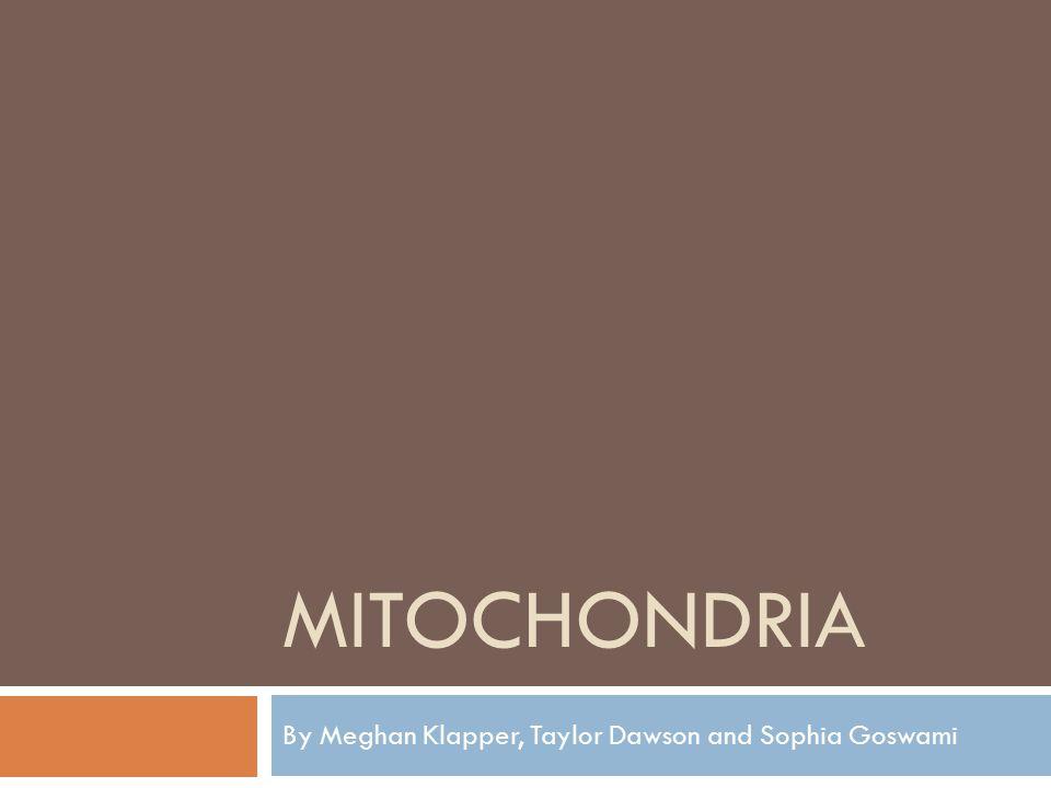 MITOCHONDRIA By Meghan Klapper, Taylor Dawson and Sophia Goswami