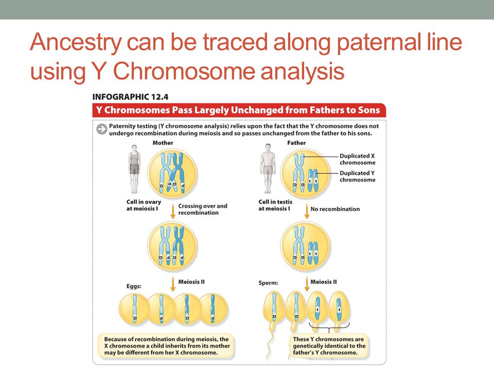 Ancestry can be traced along paternal line using Y Chromosome analysis