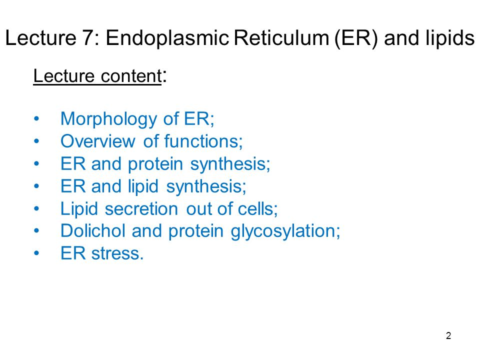 2 Lecture 7: Endoplasmic Reticulum (ER) and lipids Morphology of ER; Overview of functions; ER and protein synthesis; ER and lipid synthesis; Lipid secretion out of cells; Dolichol and protein glycosylation; ER stress.