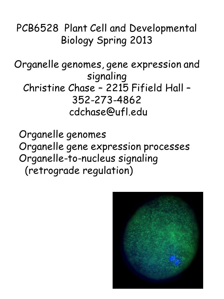 Organelle genomes Organelle gene expression processes Organelle-to-nucleus signaling (retrograde regulation) PCB6528 Plant Cell and Developmental Biology Spring 2013 Organelle genomes, gene expression and signaling Christine Chase – 2215 Fifield Hall – 352-273-4862 cdchase@ufl.edu