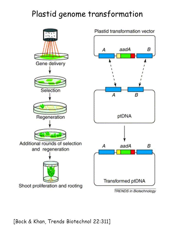 Plastid genome transformation [Bock & Khan, Trends Biotechnol 22:311]