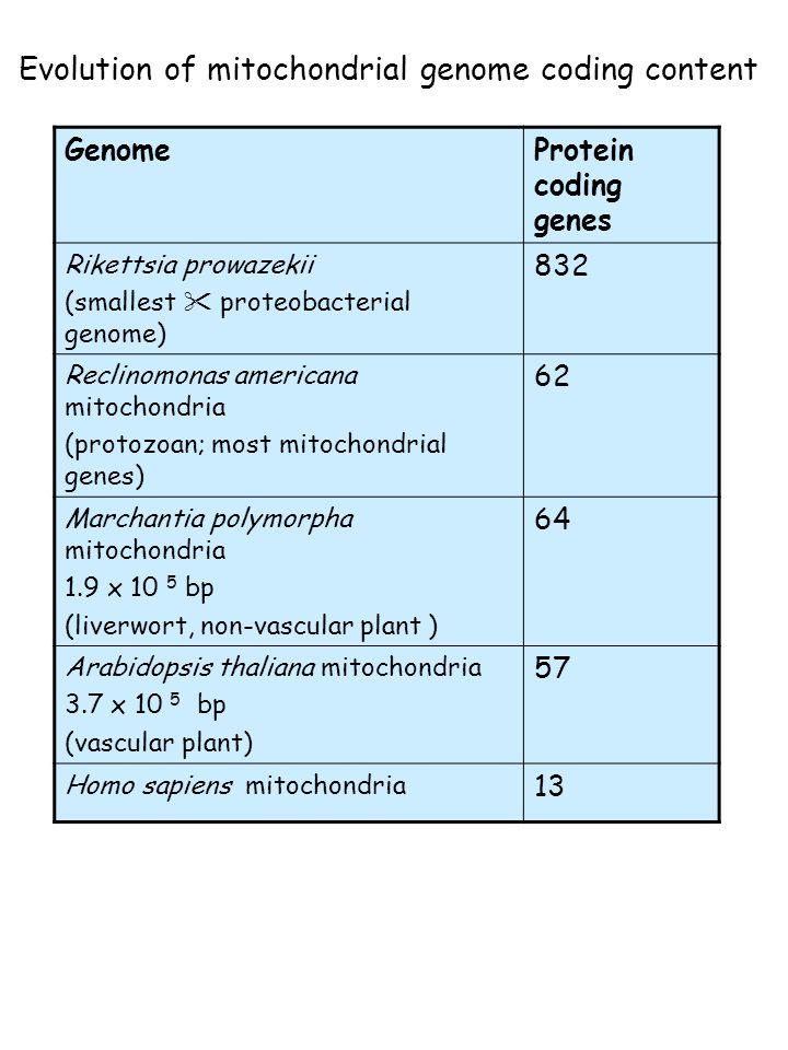 Evolution of mitochondrial genome coding content GenomeProtein coding genes Rikettsia prowazekii (smallest  proteobacterial genome) 832 Reclinomonas americana mitochondria (protozoan; most mitochondrial genes) 62 Marchantia polymorpha mitochondria 1.9 x 10 5 bp (liverwort, non-vascular plant ) 64 Arabidopsis thaliana mitochondria 3.7 x 10 5 bp (vascular plant) 57 Homo sapiens mitochondria 13