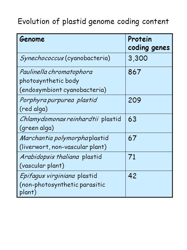 Evolution of the eukaryotic genomes Reduced coding content of organelle genomes compared to endosymbiont Functional gene transfer to nucleus with protein targeted back to organelle Functional re-shuffling - organelles replace prokaryotic features with eukaryotic, hybrid or novel features