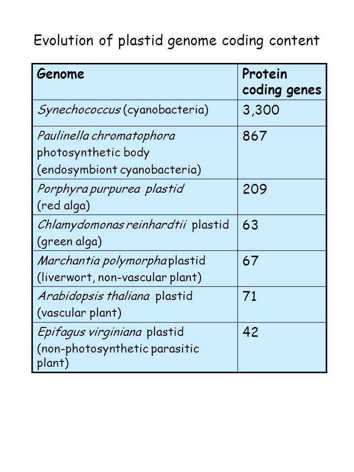 Evolution of plastid genome coding content GenomeProtein coding genes Synechococcus (cyanobacteria) 3,300 Paulinella chromatophora photosynthetic body