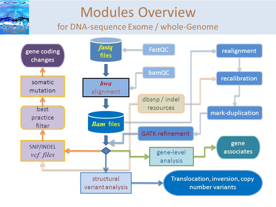 Modules Overview for DNA-sequence Exome / whole-Genome Bam files bwa alignment FastQC bamQC fastq files structural variant analysis GATK refinement SNP/INDEL vcf files somatic mutation gene-level analysis gene associates Translocation, inversion, copy number variants gene coding changes realignment recalibration mark-duplication best practice filter dbsnp / indel resources
