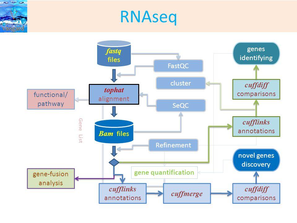 RNAseq Bam files tophat alignment FastQC SeQC fastq files cufflinks annotations cuffdiff comparisons Refinement cuffmerge gene-fusion analysis functional/ pathway cufflinks annotations cuffdiff comparisons genes identifying novel genes discovery cluster Gene List gene quantification