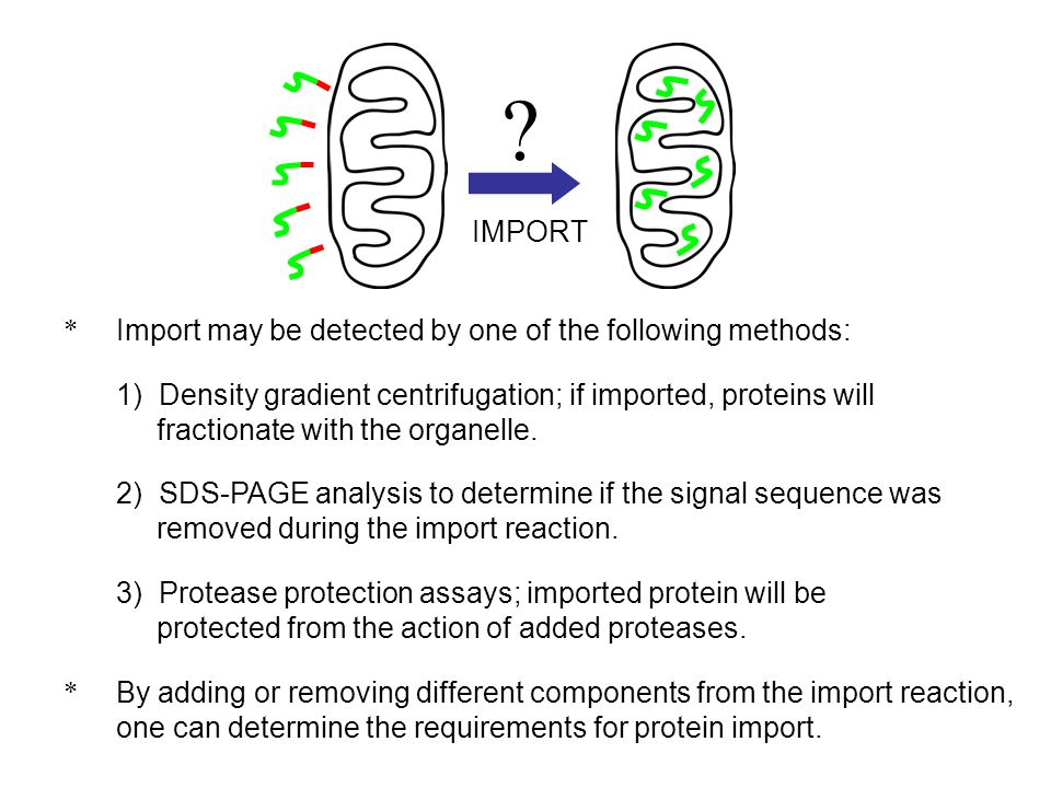 * Import may be detected by one of the following methods: 1) Density gradient centrifugation; if imported, proteins will fractionate with the organell