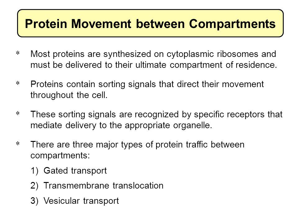 Protein coats facilitate multiple steps of vesicular transport