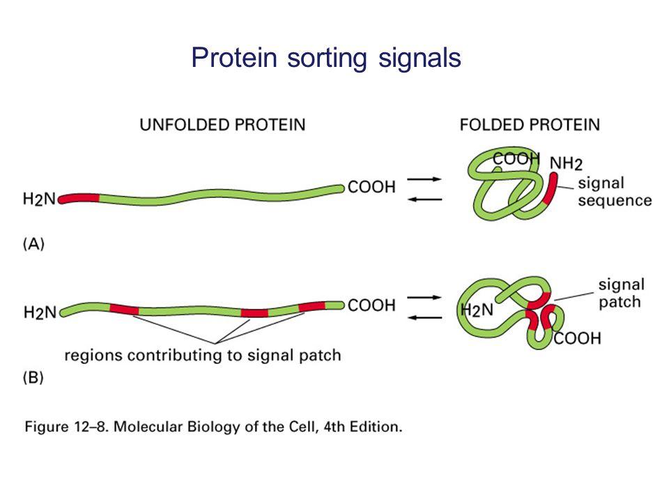 Phospholipid exchange/transfer proteins