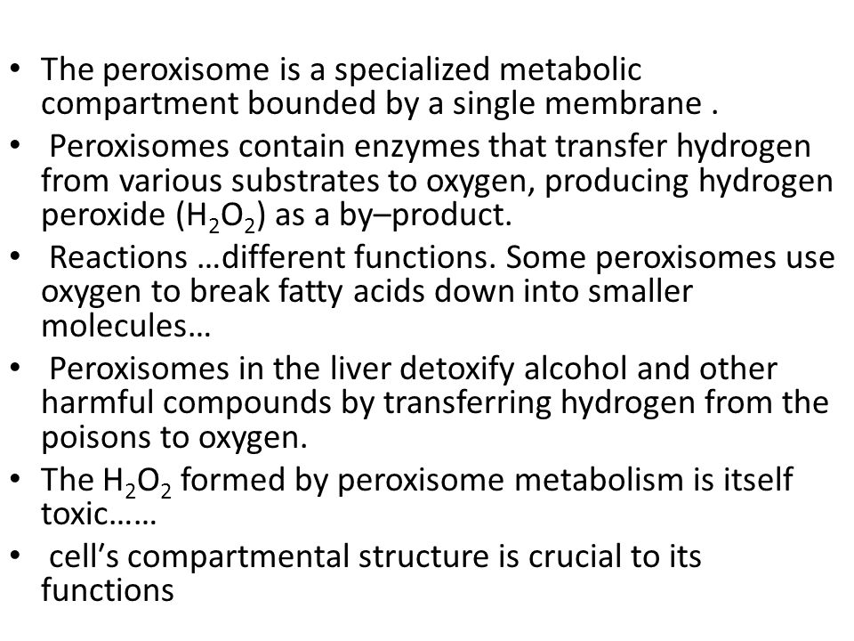 Peroxisomes Other digestive enzyme sacs – in both animals & plants – breakdown fatty acids to sugars easier to transport & use as energy source – detoxify cell detoxifies alcohol & other poisons – produce peroxide (H 2 O 2 ) must breakdown H 2 O 2  H 2 O