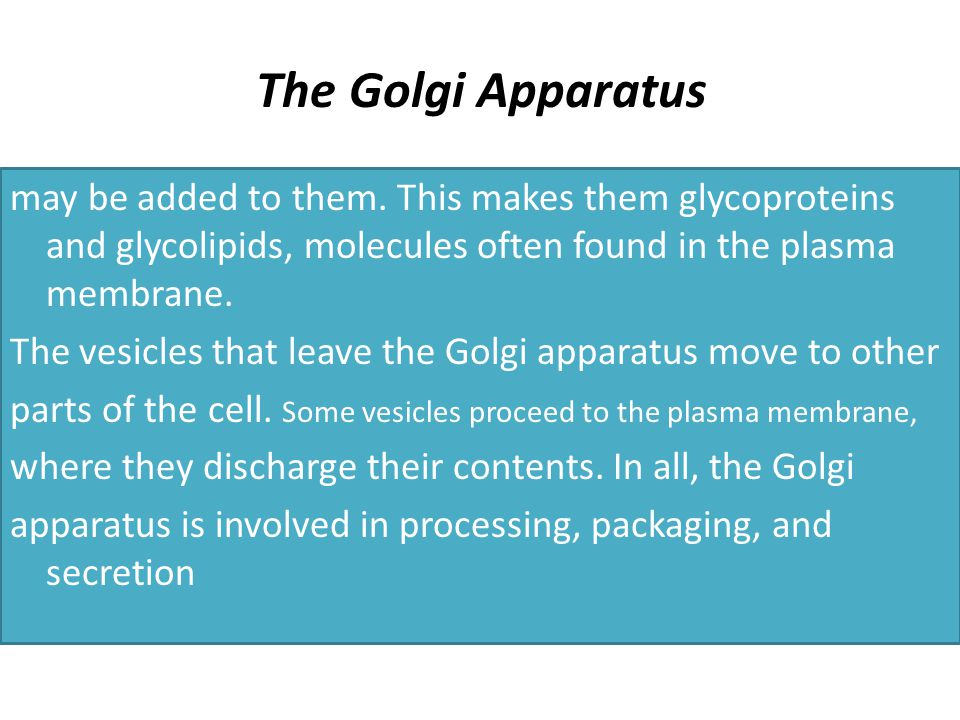 The Golgi Apparatus may be added to them.