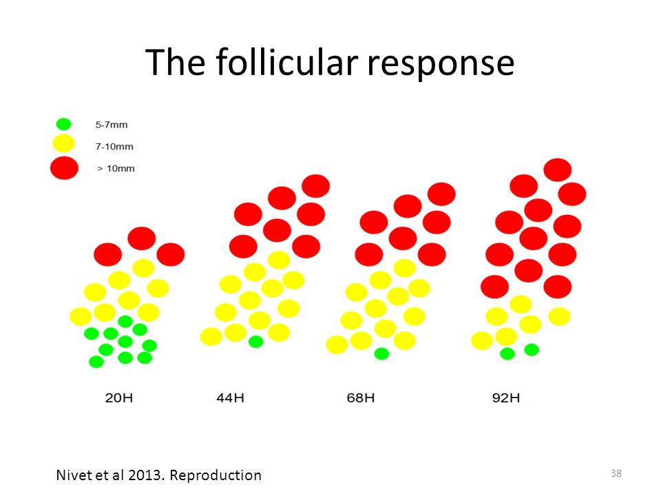 The follicular response Nivet et al 2013. Reproduction 38