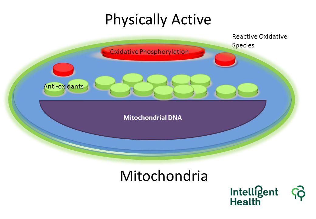 Physically Active Mitochondrial DNA Reactive Oxidative Species Oxidative Phosphorylation Anti-oxidants Mitochondria