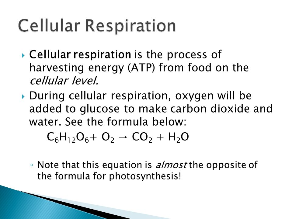  Cellular respiration is the process of harvesting energy (ATP) from food on the cellular level.