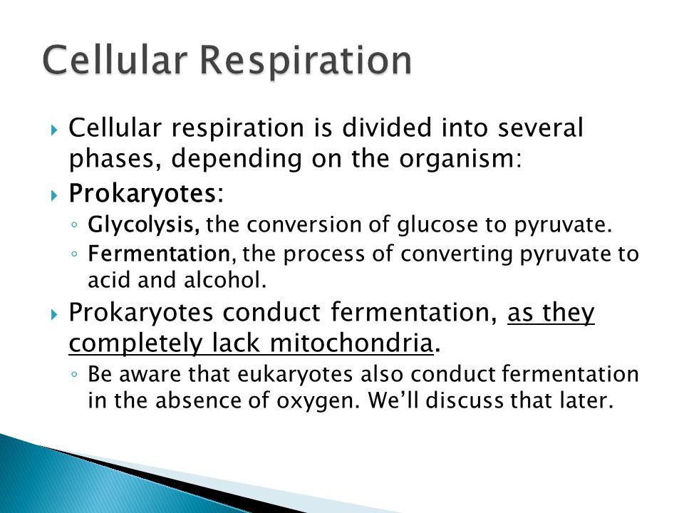  Cellular respiration is divided into several phases, depending on the organism:  Prokaryotes: ◦ Glycolysis, the conversion of glucose to pyruvate.