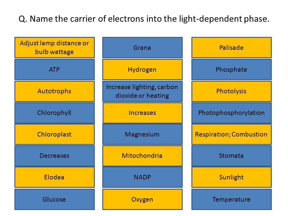 Q. Name the carrier of electrons into the light-dependent phase. Adjust lamp distance or bulb wattage Chlorophyll Glucose Elodea Decreases Increases I