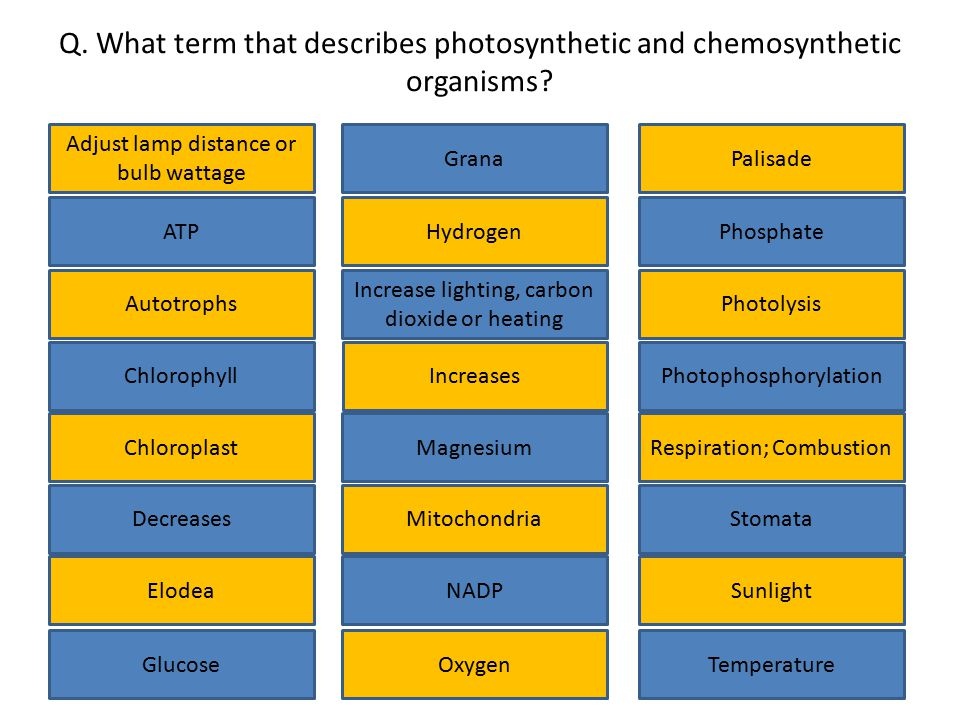Q. What term that describes photosynthetic and chemosynthetic organisms? Adjust lamp distance or bulb wattage Chlorophyll Glucose Elodea Decreases Inc