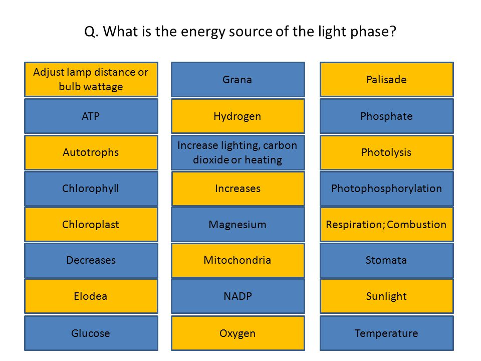 Q. What is the energy source of the light phase? Adjust lamp distance or bulb wattage Chlorophyll Glucose Elodea Decreases Increases Increase lighting