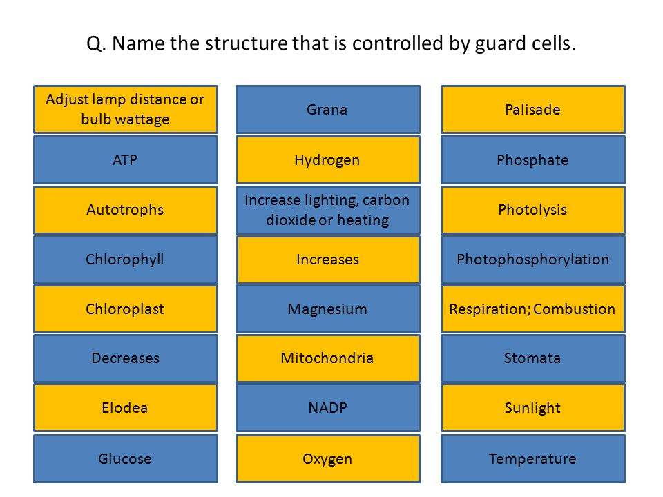 Q. Name the structure that is controlled by guard cells.