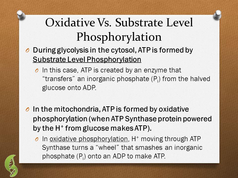 Oxidative Vs.