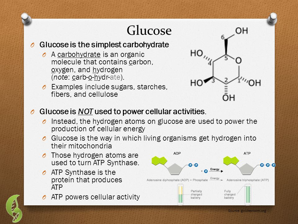Carbohydrates O All carbohydrates are made of chains of glucose.