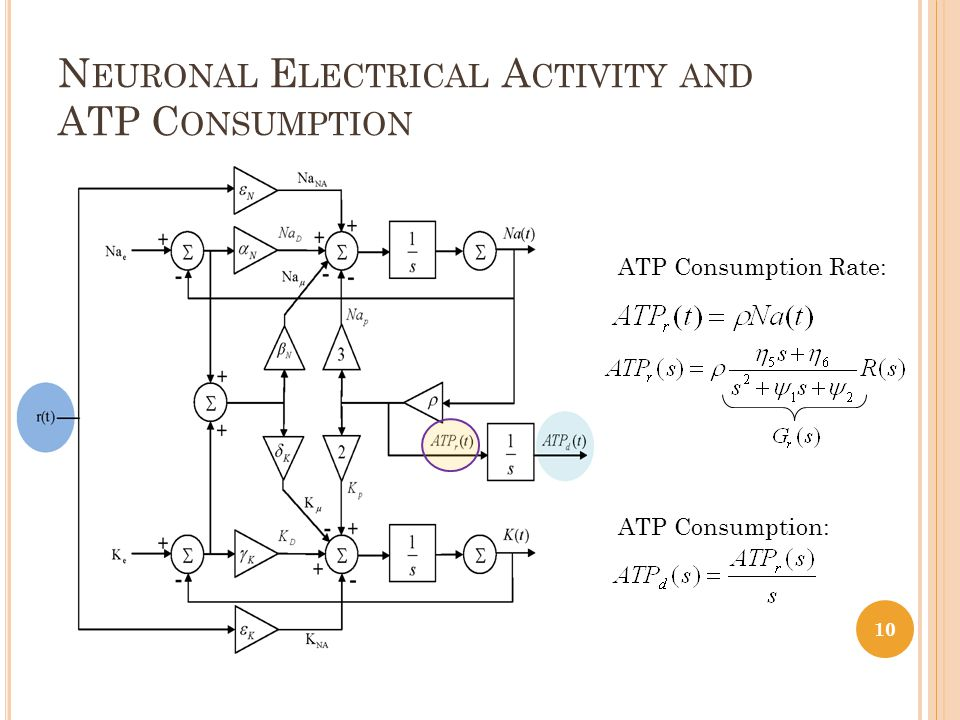 N EURONAL E LECTRICAL A CTIVITY AND ATP C ONSUMPTION 10 ATP Consumption Rate: ATP Consumption: