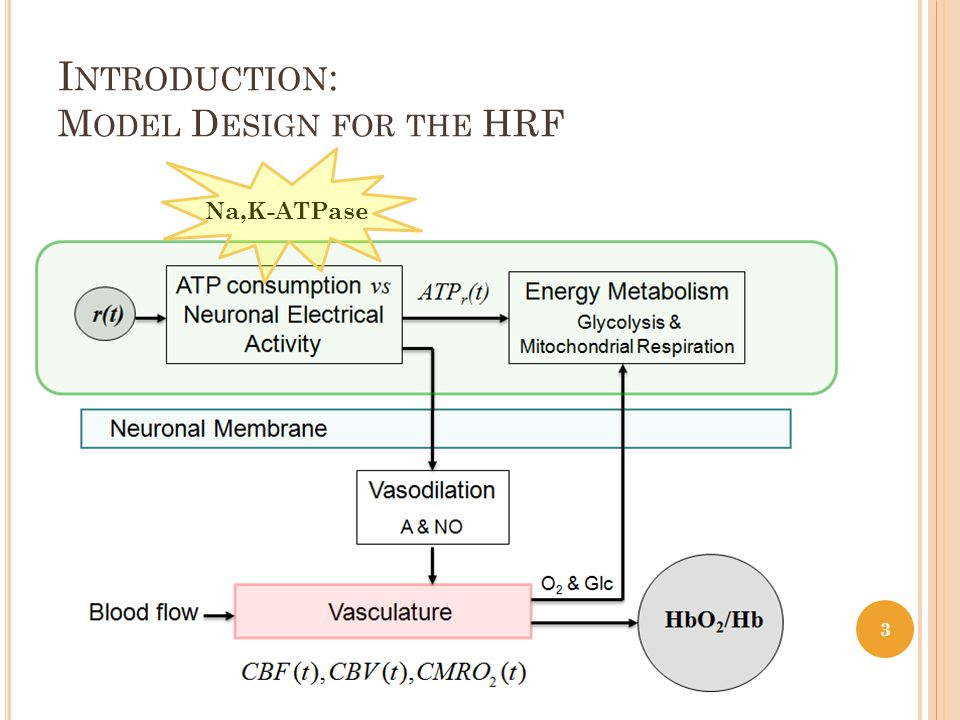 M OTIVATION A Physiologically-Based Haemodynamic linear model for the HRF ( Afonso et al (2007)) the Brain Group modulates the brain cells CMRO 2 and the vascular demand; the Vessel Group modulates the summed effect of CBV and CBF vascular changes on the oxyHb/deoxyHb rate in and around blood vessels; the Control Group for the systemic negative feedback control over vasodilation.