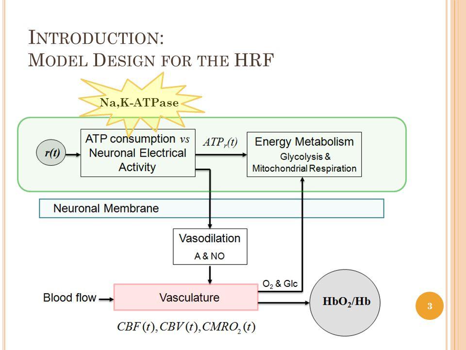I NTRODUCTION : M ODEL D ESIGN FOR THE HRF 3 Na,K-ATPase
